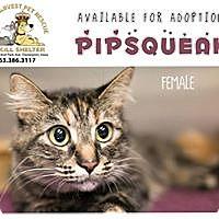 Adopt A Pet :: Pip Sqeak - Davenport, IA
