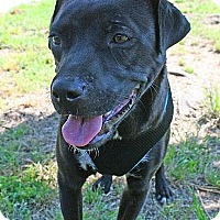 Adopt A Pet :: Emma - Pottstown, PA