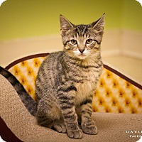 Adopt A Pet :: Poppy - Circleville, OH