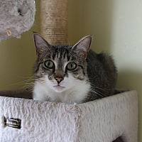Adopt A Pet :: Jade Too - Middletown, NY