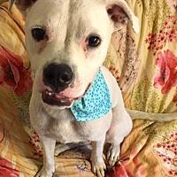 Adopt A Pet :: Buddy - Rochester, MI