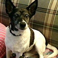 Adopt A Pet :: Ducky - Asheville, NC