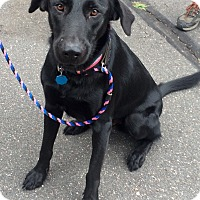 Adopt A Pet :: Shadow in CT - East Hartford, CT
