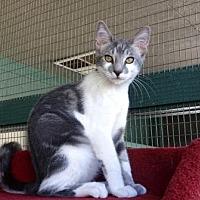 Adopt A Pet :: Mr. Smee - Lathrop, CA