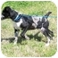 Photo 2 - Catahoula Leopard Dog Mix Puppy for adoption in Portsmouth, Rhode Island - Travis