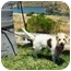 Photo 2 - Terrier (Unknown Type, Small) Mix Dog for adoption in El Cajon, California - scruffy