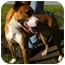 Photo 3 - Basenji Mix Dog for adoption in Humble, Texas - Annah