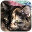 Photo 3 - Domestic Longhair Cat for adoption in Troy, Michigan - Angela & Sissy
