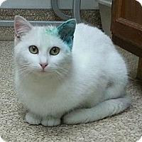 Adopt A Pet :: Yoko - Walnut, IA