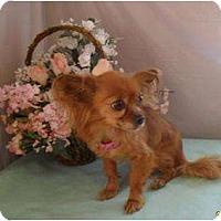 Adopt A Pet :: La Nina - Chandlersville, OH