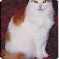 Adopt A Pet :: Nutmeg - Farmingdale, NY
