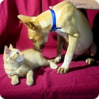 Adopt A Pet :: BIGGLES - Leland, MS