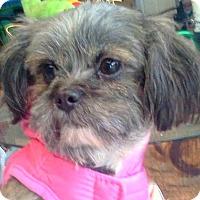 Adopt A Pet :: Molly-NY - Edmeston, NY