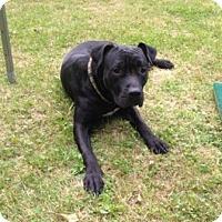 Adopt A Pet :: Peanut - New Kensington, PA