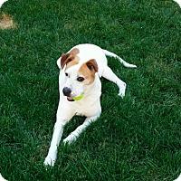Adopt A Pet :: Maxx - Brunswick, OH