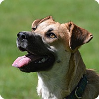 Adopt A Pet :: Angie - FOSTER HOME WANTED - Ada, MN