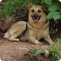 Adopt A Pet :: Adrianne - Winder, GA
