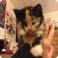 Adopt A Pet :: Kokona - Princeton, MN