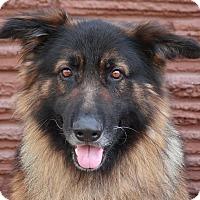 Adopt A Pet :: Barron von Bernau - Los Angeles, CA
