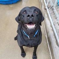 Adopt A Pet :: Jax - Aberdeen, SD
