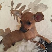 Adopt A Pet :: Miss Duffy - Fresno, CA