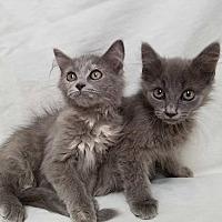 Adopt A Pet :: Eli and Ella - Staten Island, NY