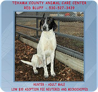 Pointer Mix Dog for adoption in Red Bluff, California - HUNTER