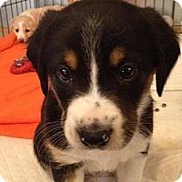 Adopt A Pet :: Zodiac - Memphis, TN