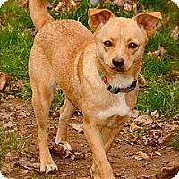 Adopt A Pet :: Blossom - Hastings, NY