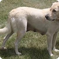 Adopt A Pet :: Mia - Lewisville, IN