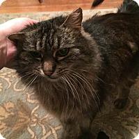 Adopt A Pet :: Sable - Chicago, IL