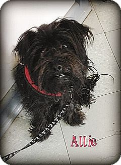 Terrier (Unknown Type, Small) Mix Dog for adoption in Austin, Texas - ALLIE in Dallas Adopted