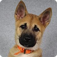 Adopt A Pet :: Jacey - Minneapolis, MN