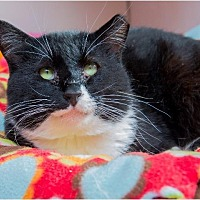 Adopt A Pet :: Max - Corinne, UT