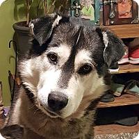 Adopt A Pet :: MEEKO - Adoption Pending - Boise, ID