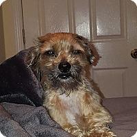 Adopt A Pet :: Chewy - ROSENBERG, TX