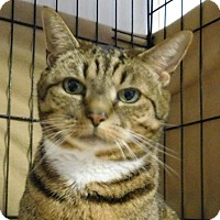 Adopt A Pet :: Cookie - Winston-Salem, NC