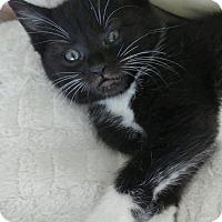 Adopt A Pet :: Oliver - Santa Rosa, CA