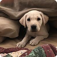 Adopt A Pet :: Poppy  431085 - San Antonio, TX