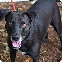 Adopt A Pet :: Joseph in CT - East Hartford, CT