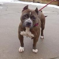 Adopt A Pet :: Hazel - Frankfort, IL