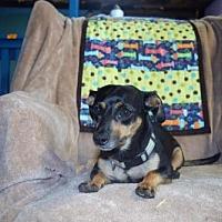 Adopt A Pet :: Lil Mamma - York, SC