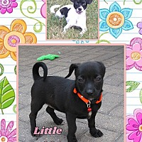 Adopt A Pet :: Little Debbie - Fort Wayne, IN
