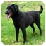 Photo 2 - Labrador Retriever Mix Dog for adoption in Peachtree City, Georgia - Jonas