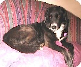 Border Collie Mix Dog for adoption in Flagstaff, Arizona - Rosie