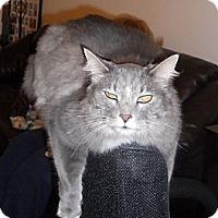 Adopt A Pet :: Giorgio - batlett, IL