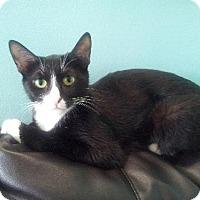 Adopt A Pet :: Joy - LaGrange Park, IL
