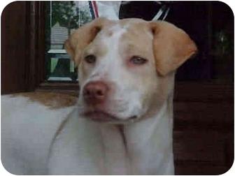 Shar Pei Mix Puppy for adoption in Houston, Texas - Skipper