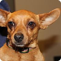 Adopt A Pet :: Sadie - Kempner, TX