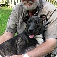 Adopt A Pet :: Dora - Albany, NY
